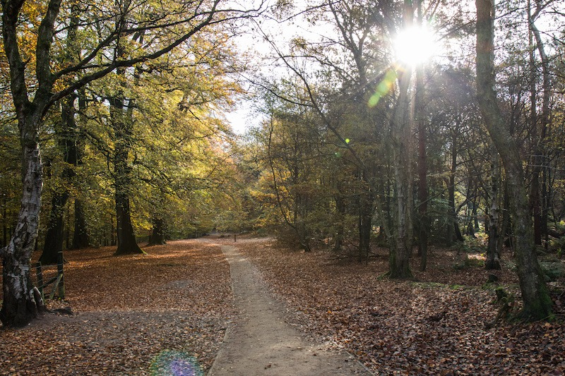 Walk-and-talk-counselling-alderley-edge